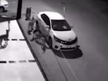 Собаки разрывают авто на куски в поисках кошки