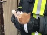 Представители Государственной пожарной службы спасают котёнка в Елгаве