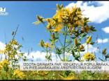 Dienasgaismu ierauga grāmata par 100 ārstniecības augiem