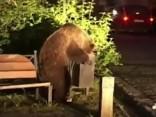 Голодные медведи вломились в румынский город
