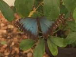 Dodies video tūrē pa Siguldas tropu tauriņu māju