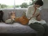 Japānā kaķi izbrauc speciālā vilciena reisā