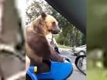 Tikai Krievijā: Lāci izvizina motociklā ar blakusvāģi