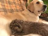 Dabas brīnums: Suņu mamma audzina leopardēnu