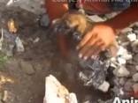 Par mata tiesu no nāves: Indijā izglābj piķī ielipušus kucēnus