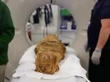 Ārsti 2000 gadus vecai mūmijai atklājuši vēzi