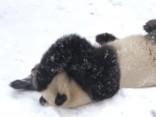 Mīlīgi - pandas bauda ziemas priekus