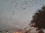 Необъяснимое нашествие птиц в США