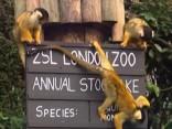Londonas zoodārzā notiek ikgadējā dzīvnieku skaitīšana