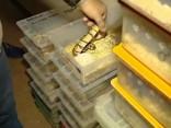 Dzīvoklī Argentīnā konfiscē vairāk nekā 200 čūskas