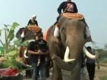 Taizemē svin Ziloņu dienu