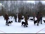 Demenes pagastā aizvadīta Latgales zonālā medību šķirnes suņu izstāde