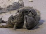 Apskati, kādi mazuļi papildinājuši Rīgas Zoodārza saimi