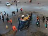 Argentīnā brīvprātīgie dodas palīgā jūras krastā izskalotam kuprvalim