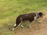 Kurls un teju akls suns pasargā apmaldījušos meiteni