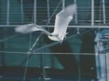 Sikspārnis-robots veic izmēģinājuma lidojumu