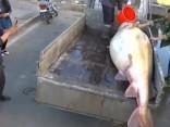 Labs ķēriens: Ķīnā noķer 514 kilogramus smagu stori
