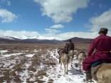 Klejojošie ziemeļbriežu gani Mongolijas sniegotajos mežos