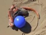 Atraktīvais astoņkājis