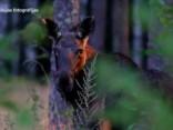 Kopā ar Sandiju Semjonovu apskati Slīteres nacionālo parku!