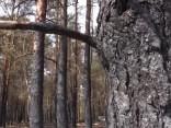 Izdevies ierobežot plašo ugunsgrēku Ādažu poligonā