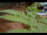 TVNET Līgo mežā: Rudzu spēka maize ar meža garšu