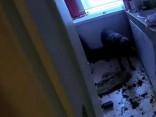 RPP glābj dzīvoklī atstātu suni