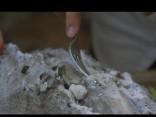 «Līgo mežā»: sāls garozā uz oglēm cepta ar upeņu lapām pildīta menca