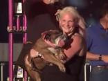 ASV apbalvots pasaulē neglītākais suns