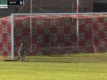 Ķengurs iesaistās Austrālijas futbola līgas spēlē