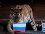 Sibīrijas tīģeris paredz Krievijas izlases uzvaru