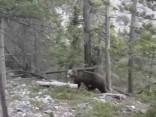 Pārgājienā Kanādā laimīgi beidzas sastapšanās ar lāci