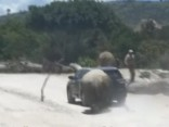 Meksikā dusmīgs degunradzis uzbrūk auto