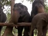 Kilograms mīļuma: Indijā ziloņi izbauda SPA